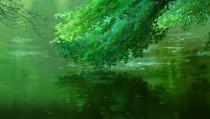 Аниме картинка Garden of Words. Kotonoha no Niwa. Сад слов